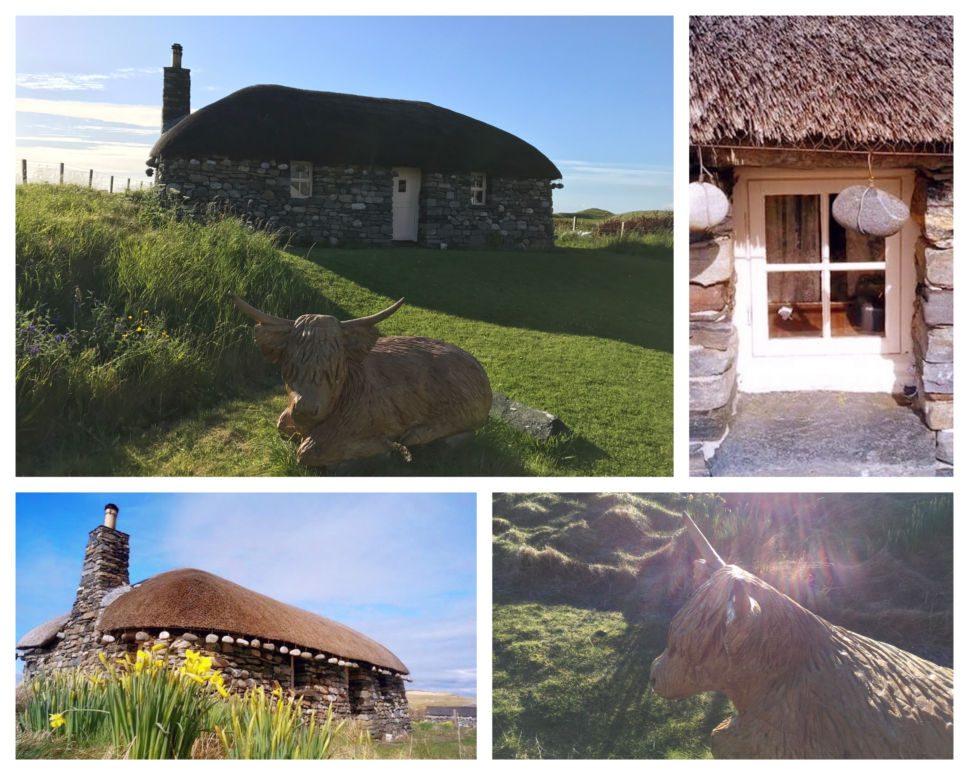 The Blackhouse and Highland Calf